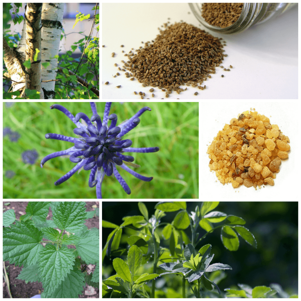 ingredients in Lifetones